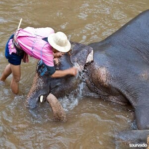 Chiang Mai Full Day Safari Mae Sa Elephant Village Tour