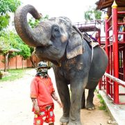 Elephant Village Tour in Pattaya