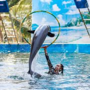 Pattaya-Dolphin-World-Show-3