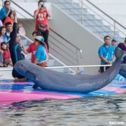 Pattaya-Dolphin-World-Show-4