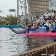 Pattaya-Dolphin-World-Show-5