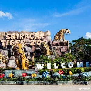 Sriracha Tiger Zoo Tour in Pattaya