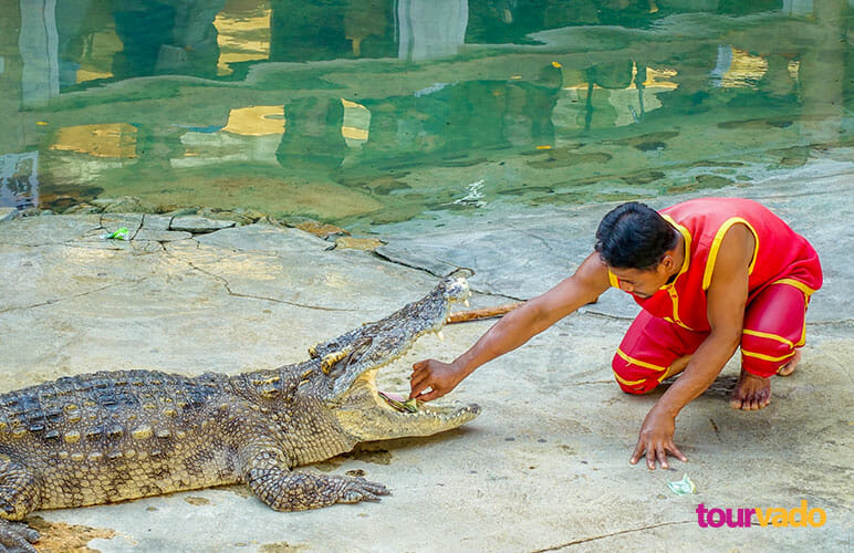 koh samui crocodile farm